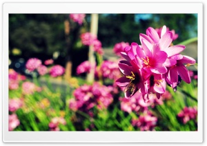 Bees and Flowers HD Wide Wallpaper for Widescreen