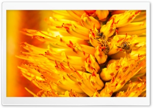 Bees Pollinating HD Wide Wallpaper for Widescreen
