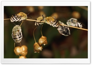Bees Sleeping HD Wide Wallpaper for Widescreen