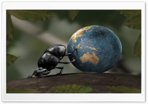 Beetle Illustration HD Wide Wallpaper for Widescreen