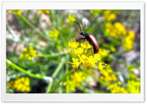 Beetle On A Flower HD Wide Wallpaper for Widescreen