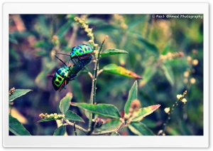 Beetles... HD Wide Wallpaper for Widescreen