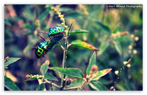Beetles... ❤ 4K UHD Wallpaper for Wide 16:10 5:3 Widescreen WHXGA WQXGA WUXGA WXGA WGA ; 4K UHD 16:9 Ultra High Definition 2160p 1440p 1080p 900p 720p ; UHD 16:9 2160p 1440p 1080p 900p 720p ; Standard 4:3 5:4 3:2 Fullscreen UXGA XGA SVGA QSXGA SXGA DVGA HVGA HQVGA ( Apple PowerBook G4 iPhone 4 3G 3GS iPod Touch ) ; iPad 1/2/Mini ; Mobile 4:3 5:3 3:2 16:9 5:4 - UXGA XGA SVGA WGA DVGA HVGA HQVGA ( Apple PowerBook G4 iPhone 4 3G 3GS iPod Touch ) 2160p 1440p 1080p 900p 720p QSXGA SXGA ;