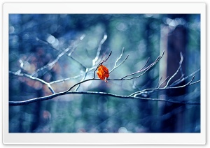 Before Winter Begins HD Wide Wallpaper for Widescreen