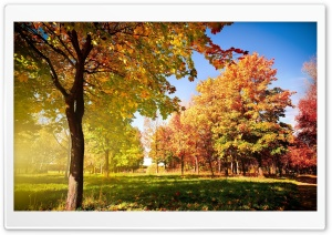 Beginning Of Autumn Ultra HD Wallpaper for 4K UHD Widescreen desktop, tablet & smartphone