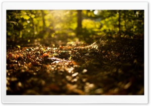 Beginning Of Autumn HD Wide Wallpaper for Widescreen