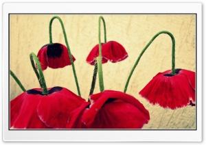 Bell Flowers HD Wide Wallpaper for 4K UHD Widescreen desktop & smartphone