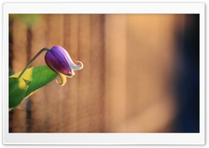 Bell Like Flower HD Wide Wallpaper for Widescreen