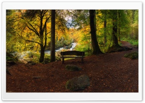 Bench, Forest, Autumn HD Wide Wallpaper for 4K UHD Widescreen desktop & smartphone