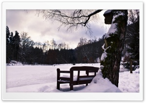 Bench In Winter HD Wide Wallpaper for 4K UHD Widescreen desktop & smartphone