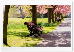 Bench Springtime HD Wide Wallpaper for Widescreen