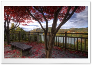 Bench Under Red Trees HD Wide Wallpaper for Widescreen