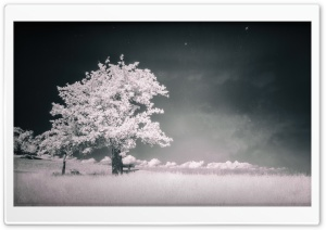Bench Under Tree Infrared HD Wide Wallpaper for Widescreen