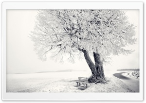 Bench Under Tree Winter HD Wide Wallpaper for Widescreen