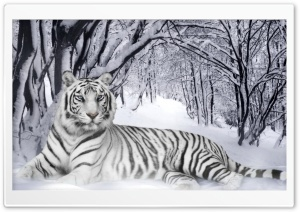 Bengal Tiger HD Wide Wallpaper for Widescreen
