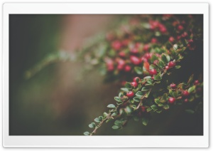 Berries Bush, Bokeh HD Wide Wallpaper for Widescreen