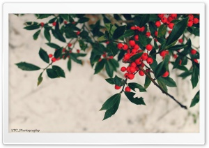 Berries, Winter HD Wide Wallpaper for Widescreen