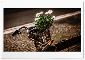 Bicycle and flowers Ultra HD Wallpaper for 4K UHD Widescreen desktop, tablet & smartphone