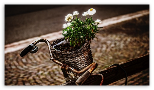 Bicycle and flowers UltraHD Wallpaper for 8K UHD TV 16:9 Ultra High Definition 2160p 1440p 1080p 900p 720p ; Mobile 16:9 - 2160p 1440p 1080p 900p 720p ;