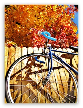 Bicycle Fall Leaves HD wallpaper for iPad 1/2/Mini ; Mobile 4:3 5:3 3:2 - UXGA XGA SVGA WGA DVGA HVGA HQVGA devices ( Apple PowerBook G4 iPhone 4 3G 3GS iPod Touch ) ;