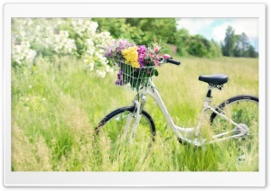 Bicycle, Field HD Wide Wallpaper for Widescreen