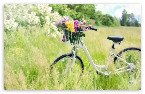 Bicycle, Field ❤ 4K UHD Wallpaper for Wide 16:10 5:3 Widescreen WHXGA WQXGA WUXGA WXGA WGA ; 4K UHD 16:9 Ultra High Definition 2160p 1440p 1080p 900p 720p ; UHD 16:9 2160p 1440p 1080p 900p 720p ; Standard 4:3 5:4 3:2 Fullscreen UXGA XGA SVGA QSXGA SXGA DVGA HVGA HQVGA ( Apple PowerBook G4 iPhone 4 3G 3GS iPod Touch ) ; Tablet 1:1 ; iPad 1/2/Mini ; Mobile 4:3 5:3 3:2 16:9 5:4 - UXGA XGA SVGA WGA DVGA HVGA HQVGA ( Apple PowerBook G4 iPhone 4 3G 3GS iPod Touch ) 2160p 1440p 1080p 900p 720p QSXGA SXGA ;