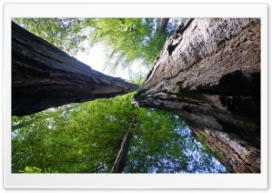 Big Basin Redwoods State Park HD Wide Wallpaper for 4K UHD Widescreen desktop & smartphone