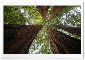 Big Basin Redwoods State Park Ultra HD Wallpaper for 4K UHD Widescreen desktop, tablet & smartphone