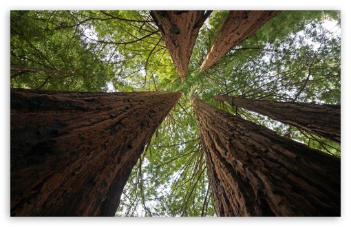 Big Basin Redwoods State Park ❤ 4K UHD Wallpaper for Wide 16:10 5:3 Widescreen WHXGA WQXGA WUXGA WXGA WGA ; 4K UHD 16:9 Ultra High Definition 2160p 1440p 1080p 900p 720p ; UHD 16:9 2160p 1440p 1080p 900p 720p ; Standard 4:3 5:4 3:2 Fullscreen UXGA XGA SVGA QSXGA SXGA DVGA HVGA HQVGA ( Apple PowerBook G4 iPhone 4 3G 3GS iPod Touch ) ; Smartphone 5:3 WGA ; Tablet 1:1 ; iPad 1/2/Mini ; Mobile 4:3 5:3 3:2 16:9 5:4 - UXGA XGA SVGA WGA DVGA HVGA HQVGA ( Apple PowerBook G4 iPhone 4 3G 3GS iPod Touch ) 2160p 1440p 1080p 900p 720p QSXGA SXGA ;