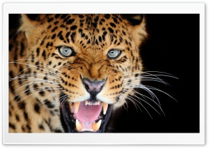 Big Cat HD Wide Wallpaper for Widescreen