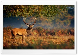Big Deer Under Tree HD Wide Wallpaper for Widescreen