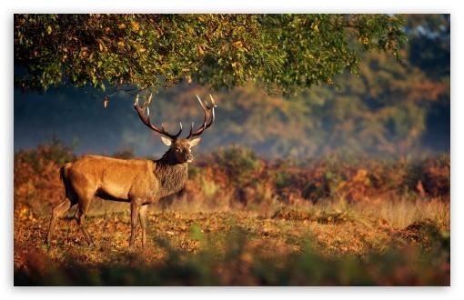 Big Deer Under Tree 4K HD Desktop Wallpaper For 4K Ultra