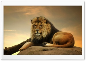 Big Lion On Stone Ultra HD Wallpaper for 4K UHD Widescreen desktop, tablet & smartphone