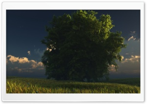 Big Tree HD Wide Wallpaper for Widescreen