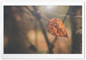Birch Leaf, Autumn HD Wide Wallpaper for Widescreen
