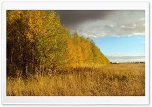 Birch Tree Forest, Autumn HD Wide Wallpaper for Widescreen