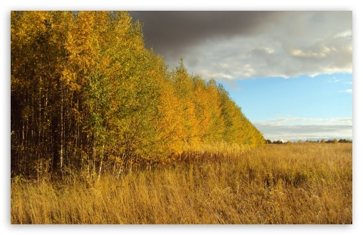 Birch Tree Forest, Autumn HD wallpaper for Wide 16:10 5:3 Widescreen WHXGA WQXGA WUXGA WXGA WGA ; HD 16:9 High Definition WQHD QWXGA 1080p 900p 720p QHD nHD ; Standard 4:3 5:4 3:2 Fullscreen UXGA XGA SVGA QSXGA SXGA DVGA HVGA HQVGA devices ( Apple PowerBook G4 iPhone 4 3G 3GS iPod Touch ) ; Tablet 1:1 ; iPad 1/2/Mini ; Mobile 4:3 5:3 3:2 16:9 5:4 - UXGA XGA SVGA WGA DVGA HVGA HQVGA devices ( Apple PowerBook G4 iPhone 4 3G 3GS iPod Touch ) WQHD QWXGA 1080p 900p 720p QHD nHD QSXGA SXGA ;