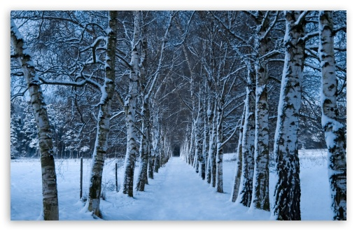 Birch Trees Alley, Winter HD wallpaper for Wide 16:10 5:3 Widescreen WHXGA WQXGA WUXGA WXGA WGA ; HD 16:9 High Definition WQHD QWXGA 1080p 900p 720p QHD nHD ; UHD 16:9 WQHD QWXGA 1080p 900p 720p QHD nHD ; Standard 4:3 5:4 3:2 Fullscreen UXGA XGA SVGA QSXGA SXGA DVGA HVGA HQVGA devices ( Apple PowerBook G4 iPhone 4 3G 3GS iPod Touch ) ; Tablet 1:1 ; iPad 1/2/Mini ; Mobile 4:3 5:3 3:2 16:9 5:4 - UXGA XGA SVGA WGA DVGA HVGA HQVGA devices ( Apple PowerBook G4 iPhone 4 3G 3GS iPod Touch ) WQHD QWXGA 1080p 900p 720p QHD nHD QSXGA SXGA ; Dual 16:10 5:3 16:9 4:3 5:4 WHXGA WQXGA WUXGA WXGA WGA WQHD QWXGA 1080p 900p 720p QHD nHD UXGA XGA SVGA QSXGA SXGA ;