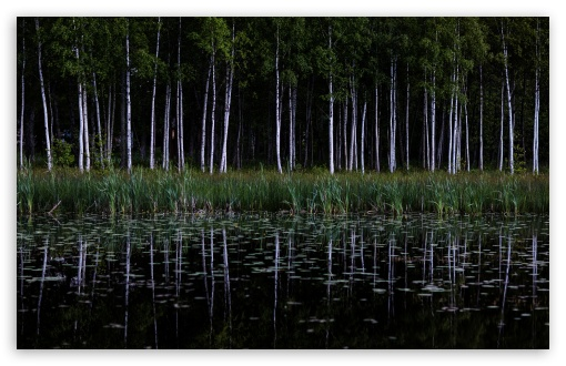 Birch Trees Forest, Lake Reflection UltraHD Wallpaper for Wide 16:10 5:3 Widescreen WHXGA WQXGA WUXGA WXGA WGA ; UltraWide 21:9 24:10 ; 8K UHD TV 16:9 Ultra High Definition 2160p 1440p 1080p 900p 720p ; UHD 16:9 2160p 1440p 1080p 900p 720p ; Standard 4:3 5:4 3:2 Fullscreen UXGA XGA SVGA QSXGA SXGA DVGA HVGA HQVGA ( Apple PowerBook G4 iPhone 4 3G 3GS iPod Touch ) ; Smartphone 16:9 3:2 5:3 2160p 1440p 1080p 900p 720p DVGA HVGA HQVGA ( Apple PowerBook G4 iPhone 4 3G 3GS iPod Touch ) WGA ; Tablet 1:1 ; iPad 1/2/Mini ; Mobile 4:3 5:3 3:2 16:9 5:4 - UXGA XGA SVGA WGA DVGA HVGA HQVGA ( Apple PowerBook G4 iPhone 4 3G 3GS iPod Touch ) 2160p 1440p 1080p 900p 720p QSXGA SXGA ; Dual 16:10 5:3 16:9 4:3 5:4 3:2 WHXGA WQXGA WUXGA WXGA WGA 2160p 1440p 1080p 900p 720p UXGA XGA SVGA QSXGA SXGA DVGA HVGA HQVGA ( Apple PowerBook G4 iPhone 4 3G 3GS iPod Touch ) ;