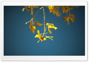 Birch Twigs And Leaves, Autumn HD Wide Wallpaper for Widescreen