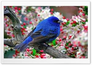 Bird 4 Ultra HD Wallpaper for 4K UHD Widescreen desktop, tablet & smartphone