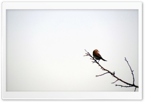 Bird - Iran - Hamadan - Razan - poshtejin@mostafa.sh HD Wide Wallpaper for Widescreen