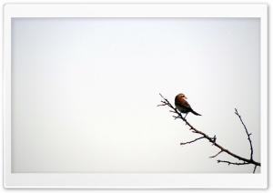 Bird - Iran - Hamadan - Razan - poshtejin@mostafa.sh Ultra HD Wallpaper for 4K UHD Widescreen desktop, tablet & smartphone