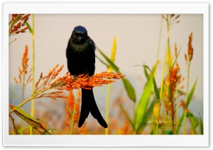 Bird - Shoaib Photography HD Wide Wallpaper for Widescreen