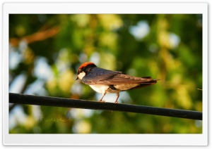 Bird - Shoaib Photography - HD Wide Wallpaper for Widescreen