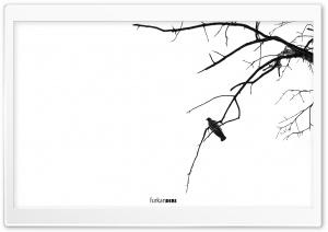 Bird Alone HD Wide Wallpaper for 4K UHD Widescreen desktop & smartphone