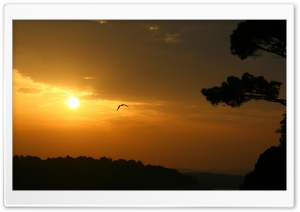 Bird And Sunset HD Wide Wallpaper for Widescreen
