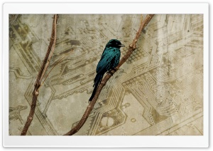 Bird Art HD Wide Wallpaper for Widescreen