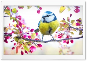 Bird, Blossom Flowers, Springtime HD Wide Wallpaper for 4K UHD Widescreen desktop & smartphone