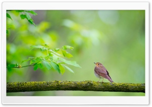 Bird, Branch, Nature HD Wide Wallpaper for 4K UHD Widescreen desktop & smartphone